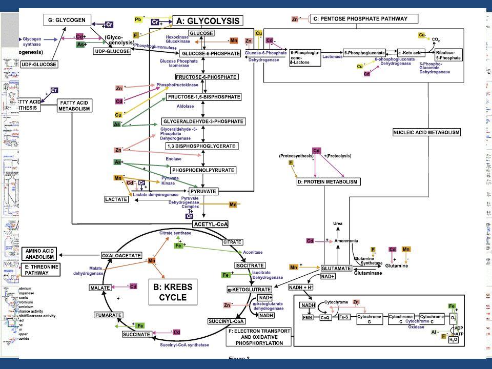ARSENİK Klinik araştırmalarda yöntem: Kan arsenik düzeyi < 1 mcg/L 4 24 saat idrar arsenik düzeyi < 35 mcg/L 5 Kan düzeyi yakın dönem, idrar düzeyi uzun dönem maruziyet hakkında bilgi verir Saç ve tırnak < 1 ppm Cut off olmalı mı olmamalı mı.