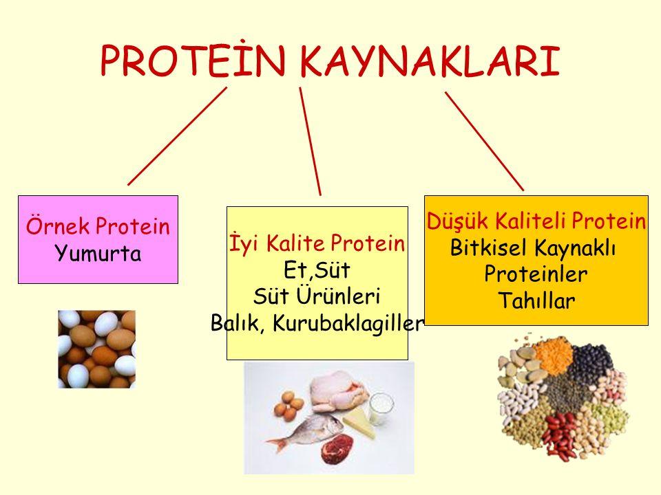 PROTEİN KAYNAKLARI Örnek Protein Yumurta İyi Kalite Protein Et,Süt Süt Ürünleri Balık, Kurubaklagiller Düşük Kaliteli Protein Bitkisel Kaynaklı Protei