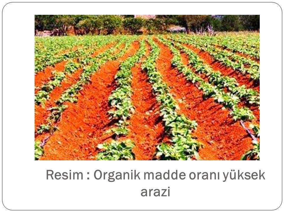 Resim : Organik madde oranı yüksek arazi