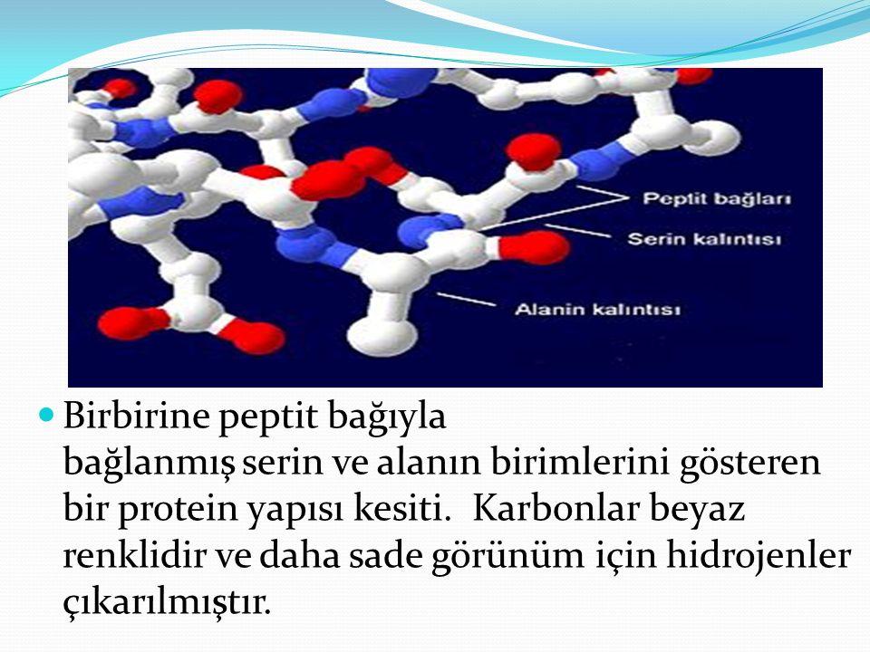 Birbirine peptit bağıyla bağlanmış serin ve alanın birimlerini gösteren bir protein yapısı kesiti. Karbonlar beyaz renklidir ve daha sade görünüm için