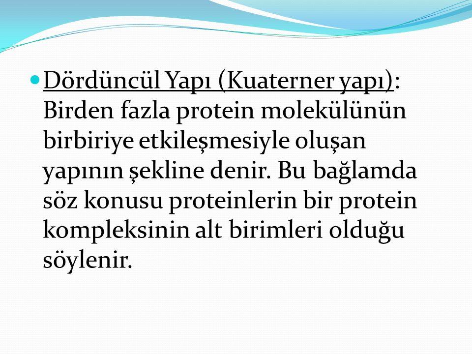 Dördüncül Yapı (Kuaterner yapı): Birden fazla protein molekülünün birbiriye etkileşmesiyle oluşan yapının şekline denir. Bu bağlamda söz konusu protei