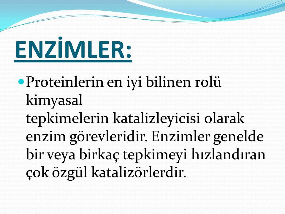 ENZİMLER: Proteinlerin en iyi bilinen rolü kimyasal tepkimelerin katalizleyicisi olarak enzim görevleridir. Enzimler genelde bir veya birkaç tepkimeyi