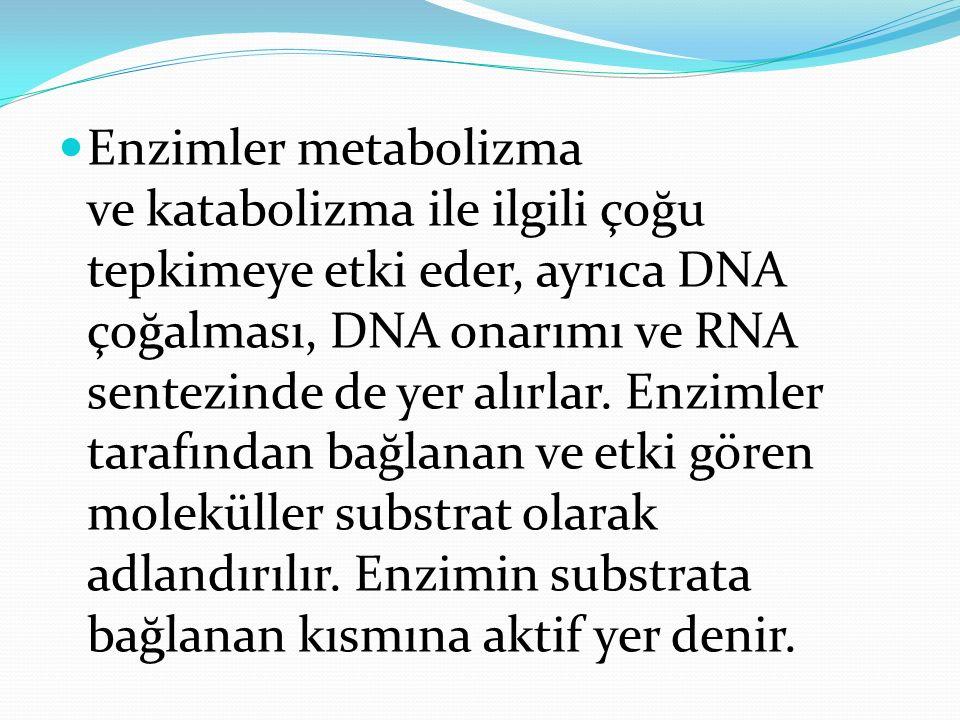 Enzimler metabolizma ve katabolizma ile ilgili çoğu tepkimeye etki eder, ayrıca DNA çoğalması, DNA onarımı ve RNA sentezinde de yer alırlar. Enzimler