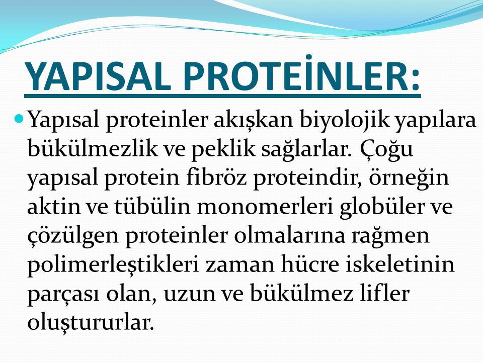 YAPISAL PROTEİNLER: Yapısal proteinler akışkan biyolojik yapılara bükülmezlik ve peklik sağlarlar. Çoğu yapısal protein fibröz proteindir, örneğin akt