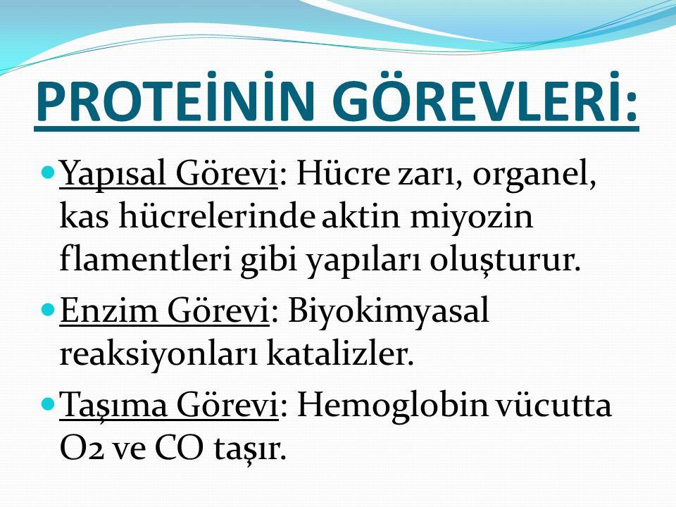 PROTEİNİN GÖREVLERİ: Yapısal Görevi: Hücre zarı, organel, kas hücrelerinde aktin miyozin flamentleri gibi yapıları oluşturur. Enzim Görevi: Biyokimyas