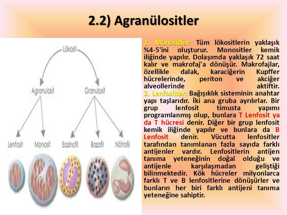 2.2) Agranülositler 1. Monositler: 2. Lenfositler: 1. Monositler: Tüm lökositlerin yaklaşık %4-5'ini oluşturur. Monositler kemik iliğinde yapılır. Dol