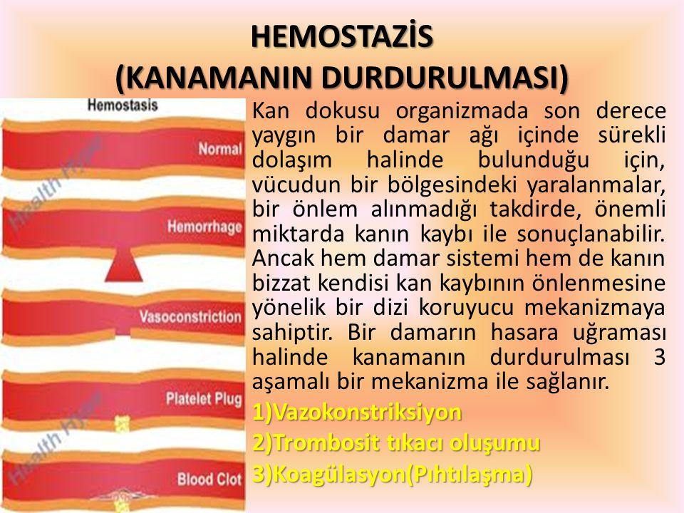 HEMOSTAZİS (KANAMANIN DURDURULMASI) Kan dokusu organizmada son derece yaygın bir damar ağı içinde sürekli dolaşım halinde bulunduğu için, vücudun bir
