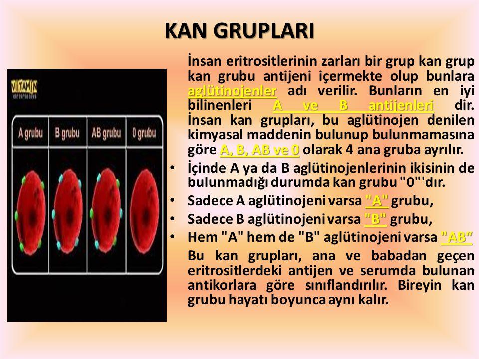 KAN GRUPLARI aglütinojenler A ve B antijenleri A, B, AB ve 0 İnsan eritrositlerinin zarları bir grup kan grup kan grubu antijeni içermekte olup bunlar