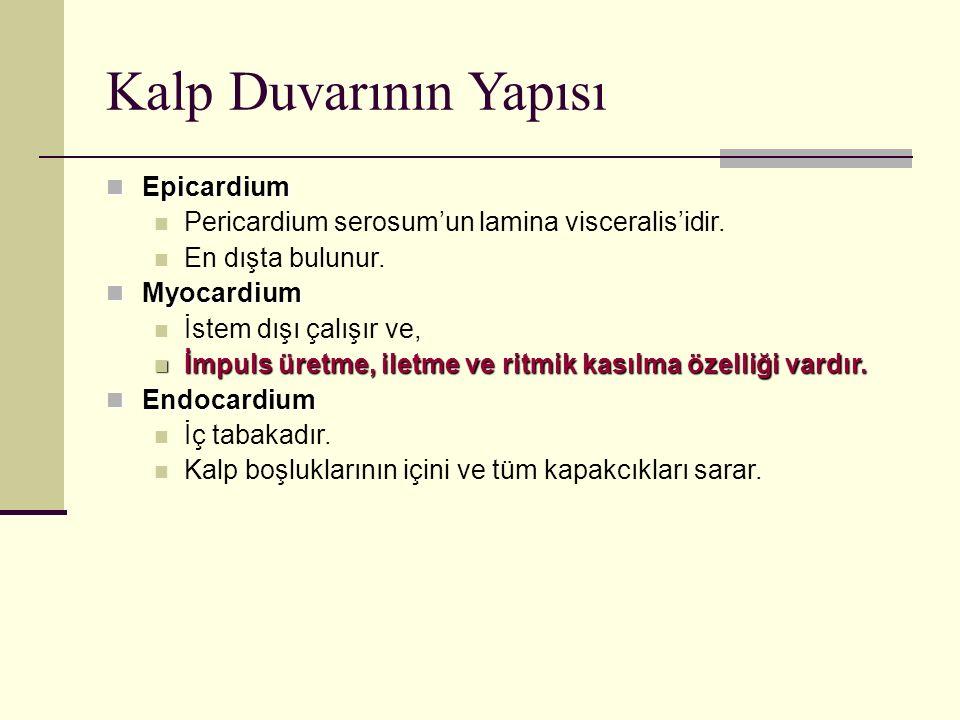Kalp Duvarının Yapısı Epicardium Epicardium Pericardium serosum'un lamina visceralis'idir. En dışta bulunur. Myocardium Myocardium İstem dışı çalışır