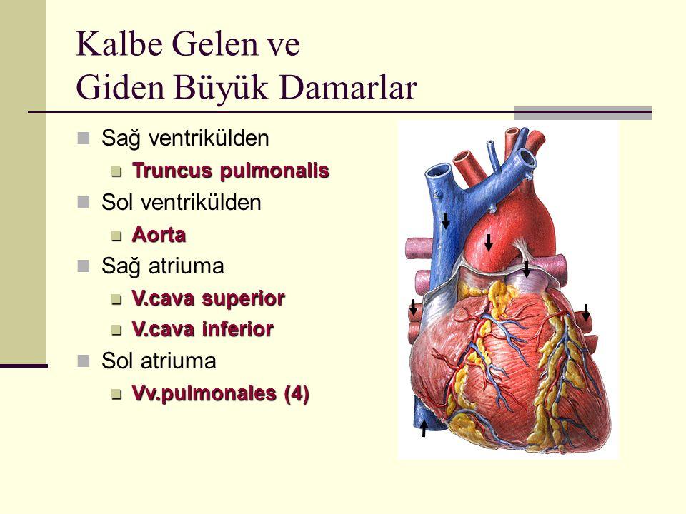 Kalbe Gelen ve Giden Büyük Damarlar Sağ ventrikülden Truncus pulmonalis Truncus pulmonalis Sol ventrikülden Aorta Aorta Sağ atriuma V.cava superior V.