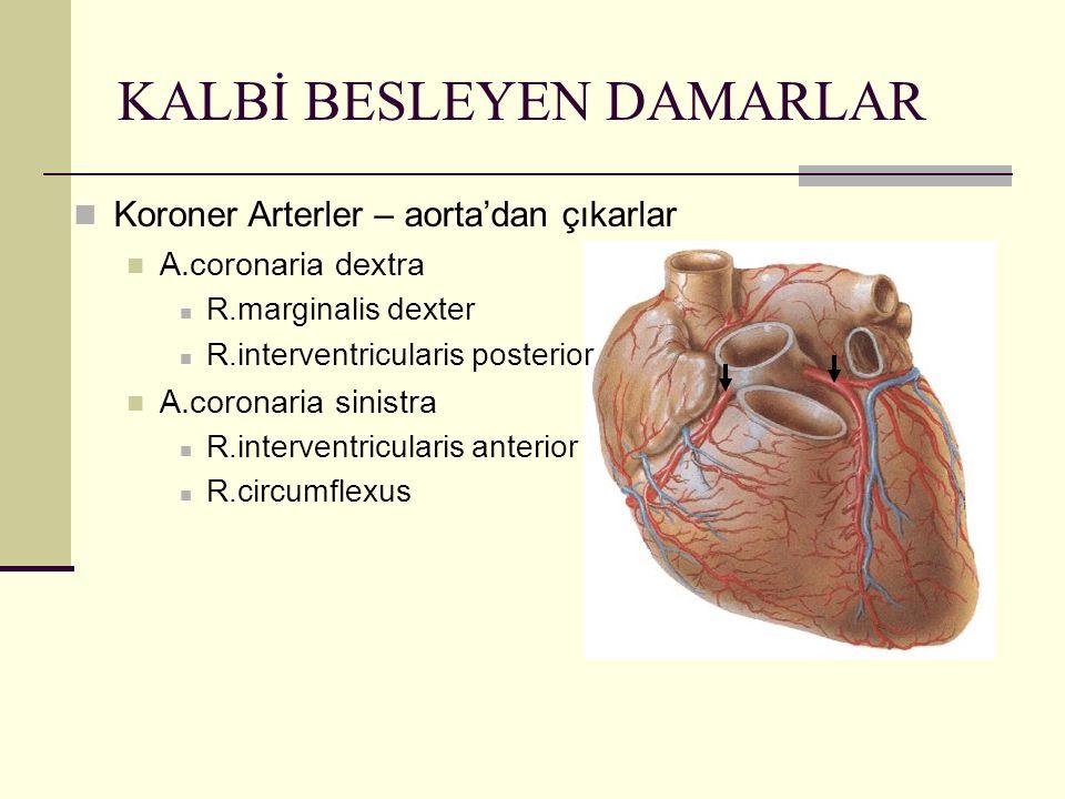 KALBİ BESLEYEN DAMARLAR Koroner Arterler – aorta'dan çıkarlar A.coronaria dextra R.marginalis dexter R.interventricularis posterior A.coronaria sinist