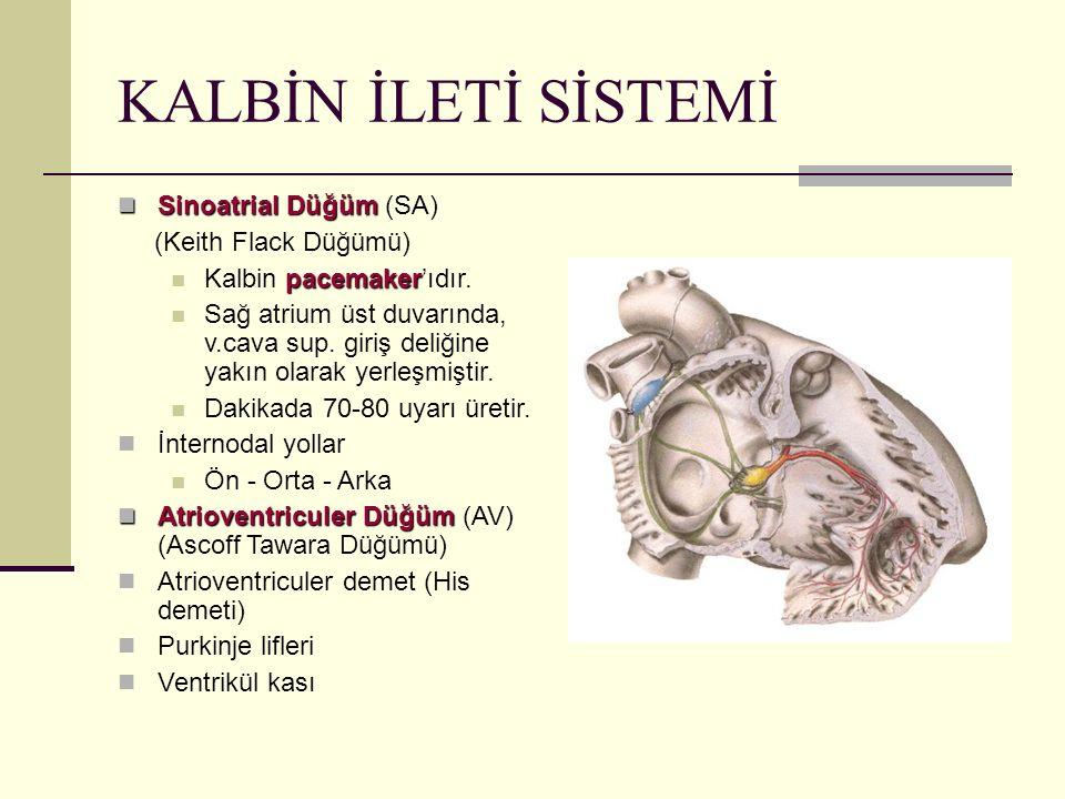 KALBİN İLETİ SİSTEMİ Sinoatrial Düğüm Sinoatrial Düğüm (SA) (Keith Flack Düğümü) pacemaker Kalbin pacemaker'ıdır. Sağ atrium üst duvarında, v.cava sup