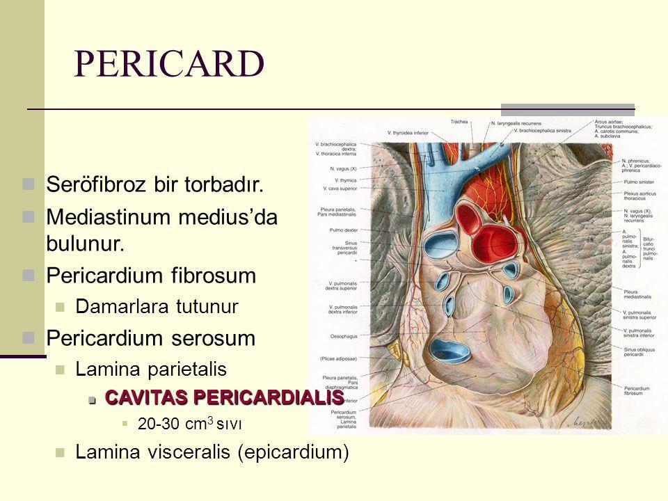 PERICARD Seröfibroz bir torbadır. Mediastinum medius'da bulunur. Pericardium fibrosum Damarlara tutunur Pericardium serosum Lamina parietalis CAVITAS