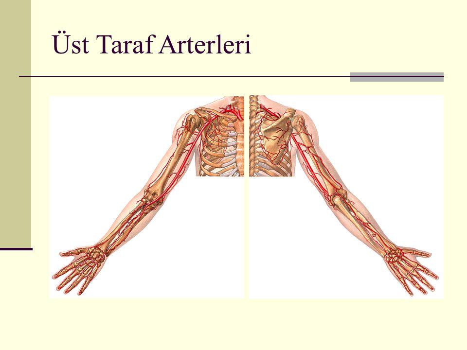 Üst Taraf Arterleri