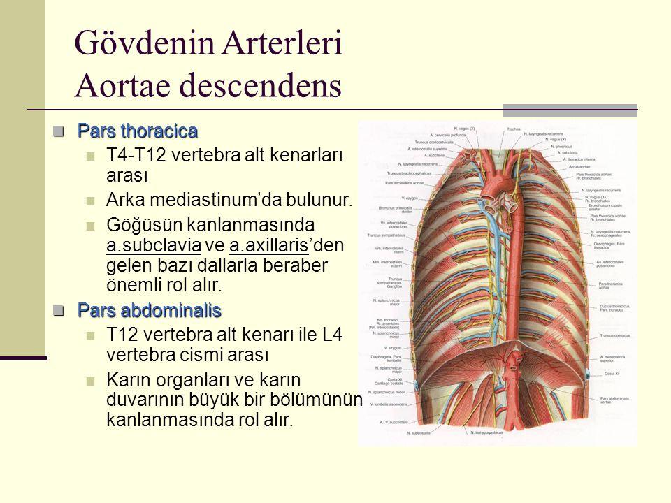 Gövdenin Arterleri Aortae descendens Pars thoracica Pars thoracica T4-T12 vertebra alt kenarları arası Arka mediastinum'da bulunur. a.subclaviaa.axill