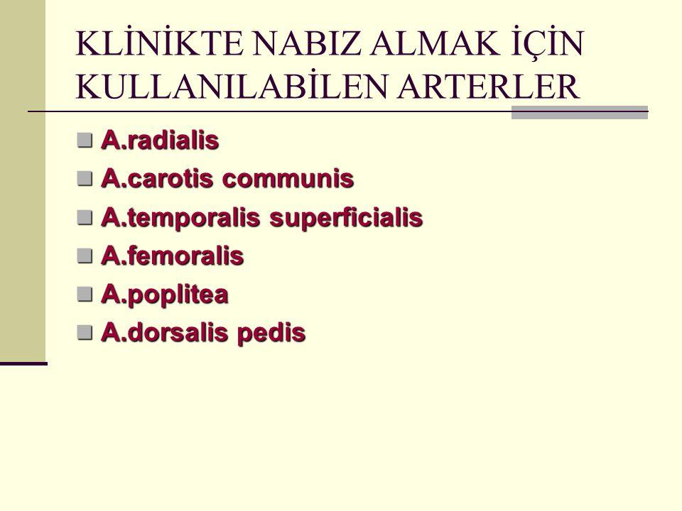 KLİNİKTE NABIZ ALMAK İÇİN KULLANILABİLEN ARTERLER A.radialis A.radialis A.carotis communis A.carotis communis A.temporalis superficialis A.temporalis