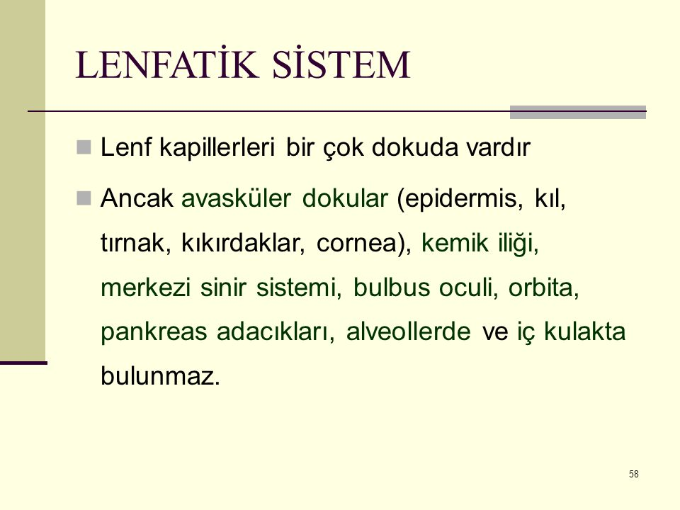 58 LENFATİK SİSTEM Lenf kapillerleri bir çok dokuda vardır Ancak avasküler dokular (epidermis, kıl, tırnak, kıkırdaklar, cornea), kemik iliği, merkezi