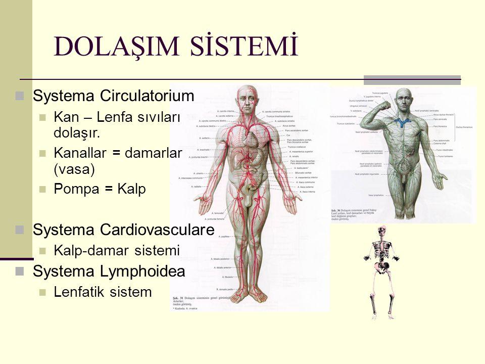DOLAŞIM SİSTEMİ Systema Circulatorium Kan – Lenfa sıvıları dolaşır. Kanallar = damarlar (vasa) Pompa = Kalp Systema Cardiovasculare Kalp-damar sistemi