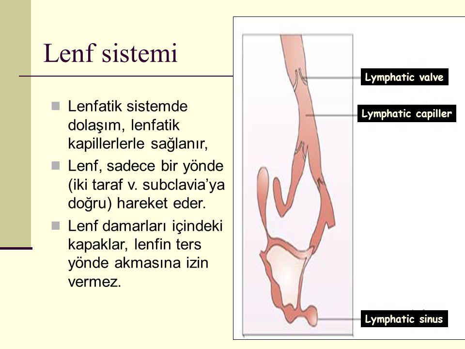 60 Lenfatik sistemde dolaşım, lenfatik kapillerlerle sağlanır, Lenf, sadece bir yönde (iki taraf v. subclavia'ya doğru) hareket eder. Lenf damarları i