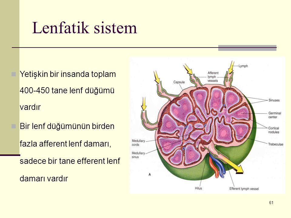 61 Lenfatik sistem Yetişkin bir insanda toplam 400-450 tane lenf düğümü vardır Bir lenf düğümünün birden fazla afferent lenf damarı, sadece bir tane e