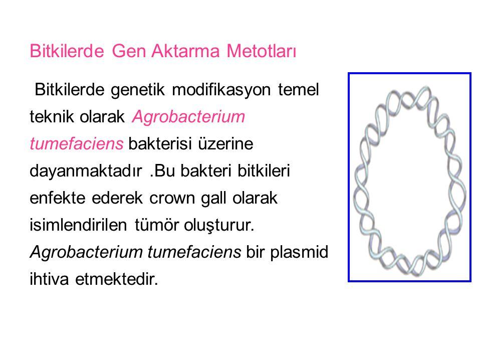 Bitkilerde Gen Aktarma Metotları Bitkilerde genetik modifikasyon temel teknik olarak Agrobacterium tumefaciens bakterisi üzerine dayanmaktadır.Bu bakt
