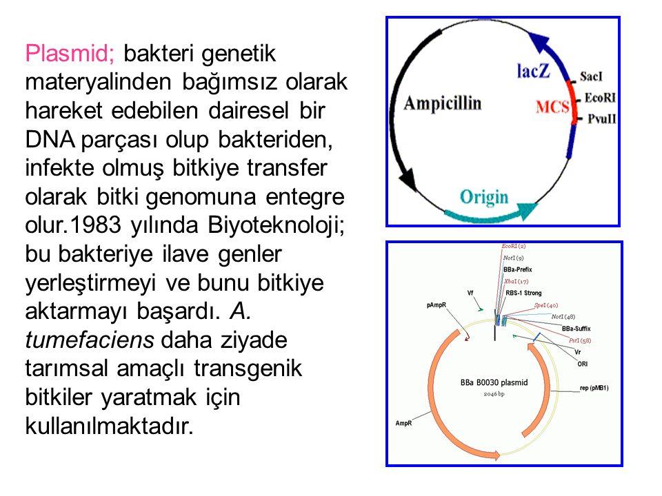 Plasmid; bakteri genetik materyalinden bağımsız olarak hareket edebilen dairesel bir DNA parçası olup bakteriden, infekte olmuş bitkiye transfer olara