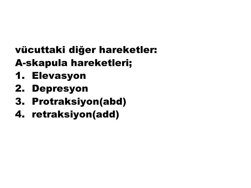 vücuttaki diğer hareketler: A-skapula hareketleri; 1.Elevasyon 2.Depresyon 3.Protraksiyon(abd) 4.retraksiyon(add)