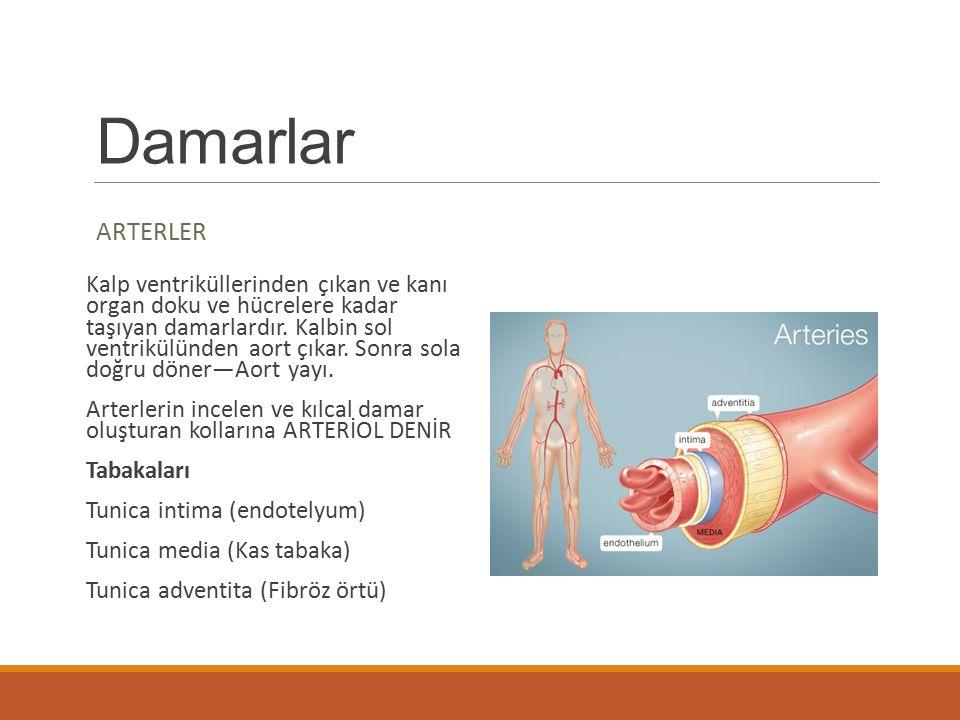 Damarlar ARTERLER Kalp ventriküllerinden çıkan ve kanı organ doku ve hücrelere kadar taşıyan damarlardır. Kalbin sol ventrikülünden aort çıkar. Sonra
