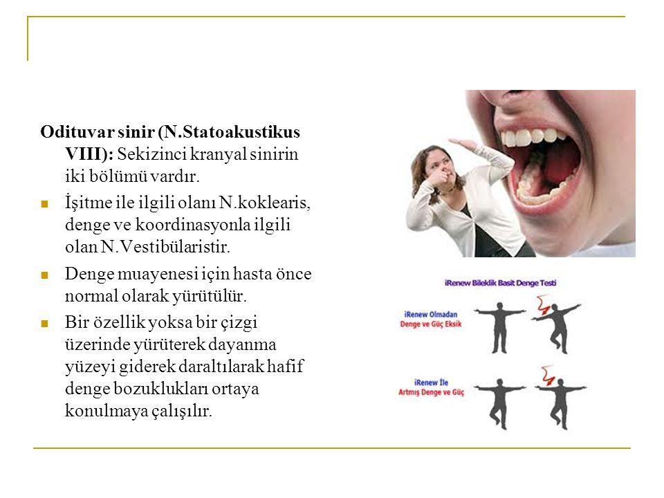 Odituvar sinir (N.Statoakustikus VIII): Sekizinci kranyal sinirin iki bölümü vardır. İşitme ile ilgili olanı N.koklearis, denge ve koordinasyonla ilgi