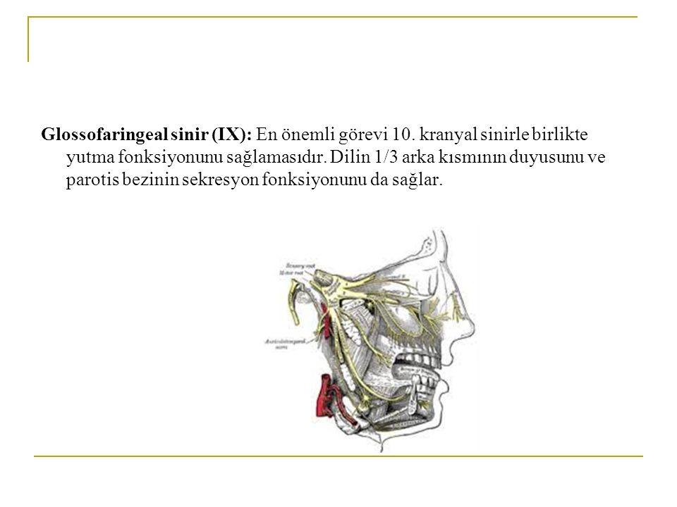 Glossofaringeal sinir (IX): En önemli görevi 10. kranyal sinirle birlikte yutma fonksiyonunu sağlamasıdır. Dilin 1/3 arka kısmının duyusunu ve parotis