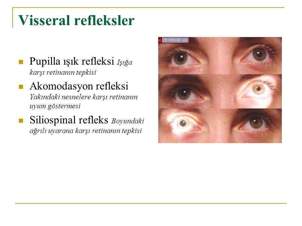 Visseral refleksler Pupilla ışık refleksi Işığa karşı retinanın tepkisi Akomodasyon refleksi Yakındaki nesnelere karşı retinanın uyum göstermesi Silio