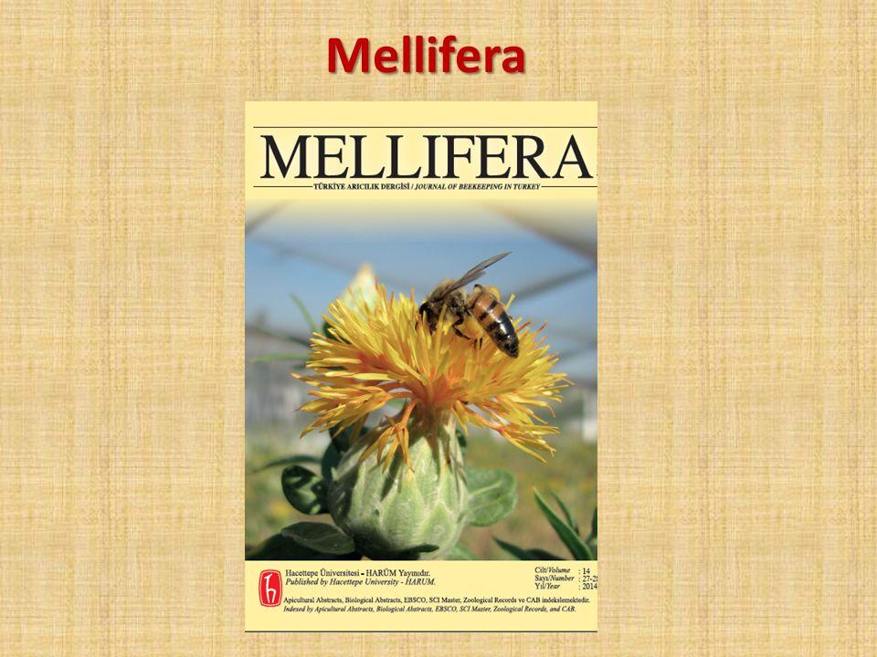 Mellifera