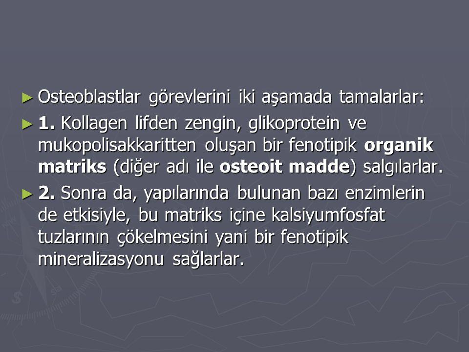 ► Osteoblastlar görevlerini iki aşamada tamalarlar: ► 1.