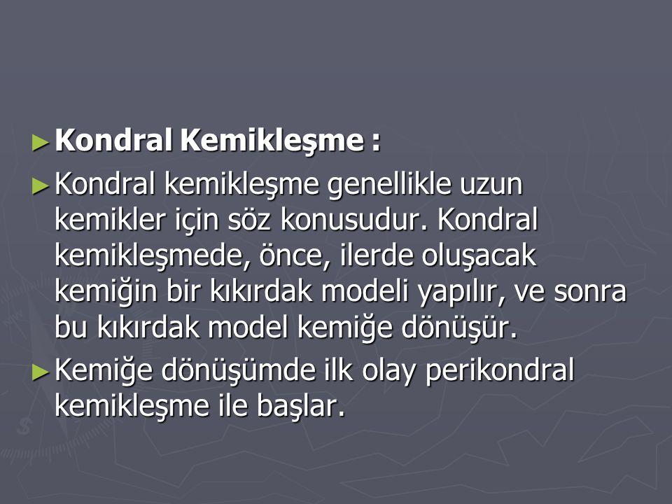 ► Kondral Kemikleşme : ► Kondral kemikleşme genellikle uzun kemikler için söz konusudur. Kondral kemikleşmede, önce, ilerde oluşacak kemiğin bir kıkır