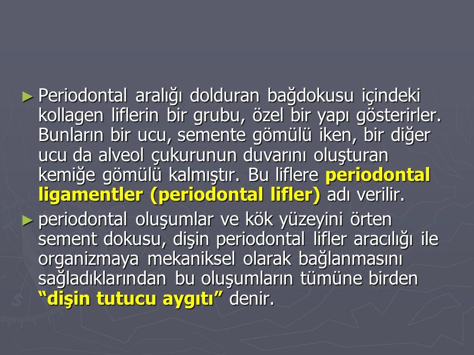 ► Periodontal aralığı dolduran bağdokusu içindeki kollagen liflerin bir grubu, özel bir yapı gösterirler.