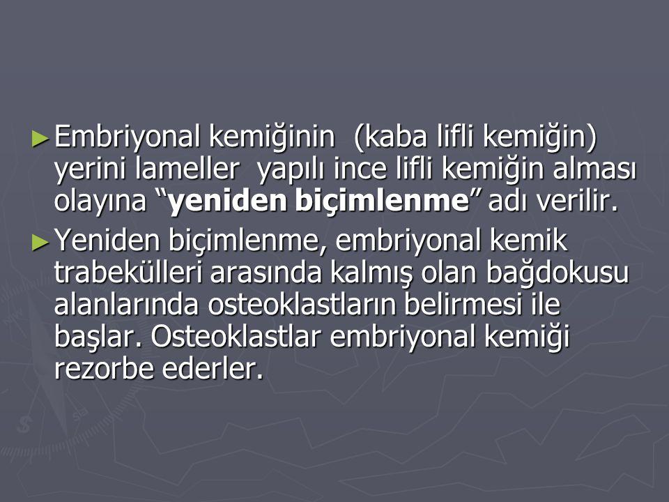► Embriyonal kemiğinin (kaba lifli kemiğin) yerini lameller yapılı ince lifli kemiğin alması olayına yeniden biçimlenme adı verilir.