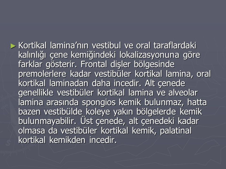 ► Kortikal lamina'nın vestibul ve oral taraflardaki kalınlığı çene kemiğindeki lokalizasyonuna göre farklar gösterir.