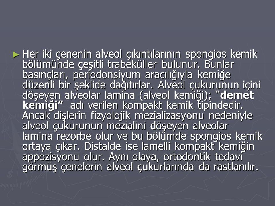 ► Her iki çenenin alveol çıkıntılarının spongios kemik bölümünde çeşitli trabeküller bulunur. Bunlar basınçları, periodonsiyum aracılığıyla kemiğe düz