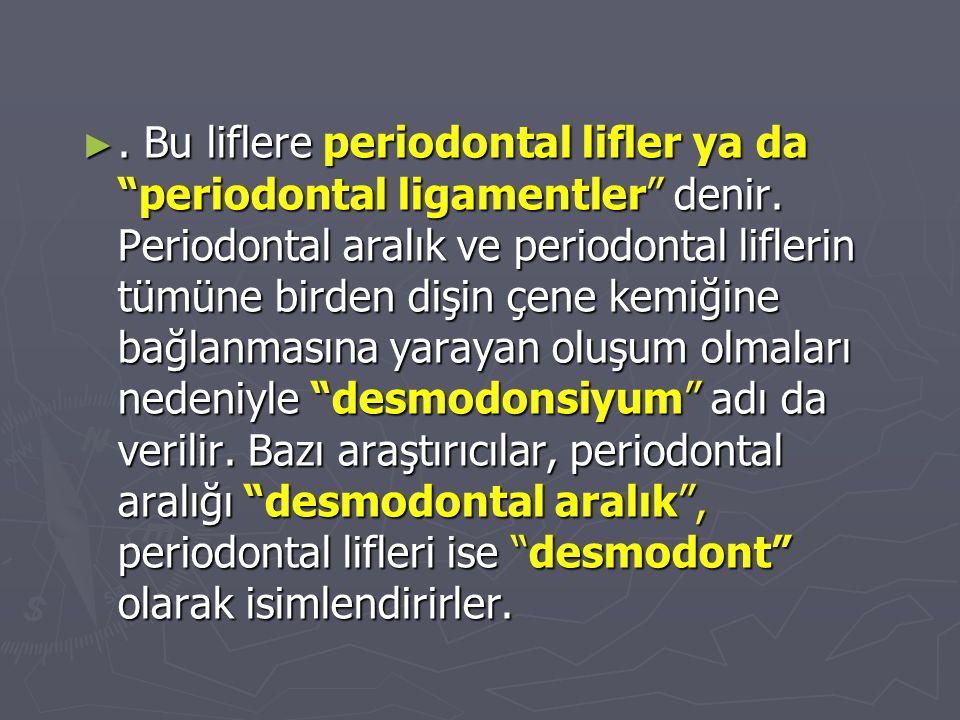 """►. Bu liflere periodontal lifler ya da """"periodontal ligamentler"""" denir. Periodontal aralık ve periodontal liflerin tümüne birden dişin çene kemiğine b"""