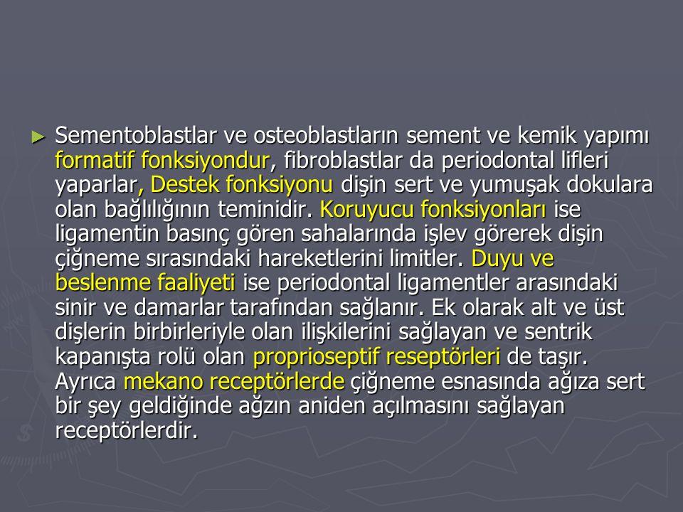 ► Sementoblastlar ve osteoblastların sement ve kemik yapımı formatif fonksiyondur, fibroblastlar da periodontal lifleri yaparlar, Destek fonksiyonu di