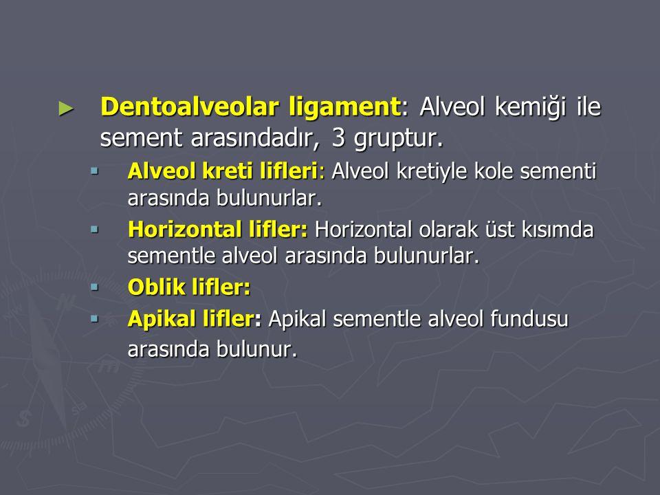 ► Dentoalveolar ligament: Alveol kemiği ile sement arasındadır, 3 gruptur.  Alveol kreti lifleri: Alveol kretiyle kole sementi arasında bulunurlar. 
