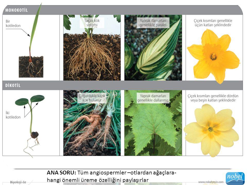 ANA SORU: Tüm angiospermler –otlardan ağaçlara- hangi önemli üreme özelliğini paylaşırlar