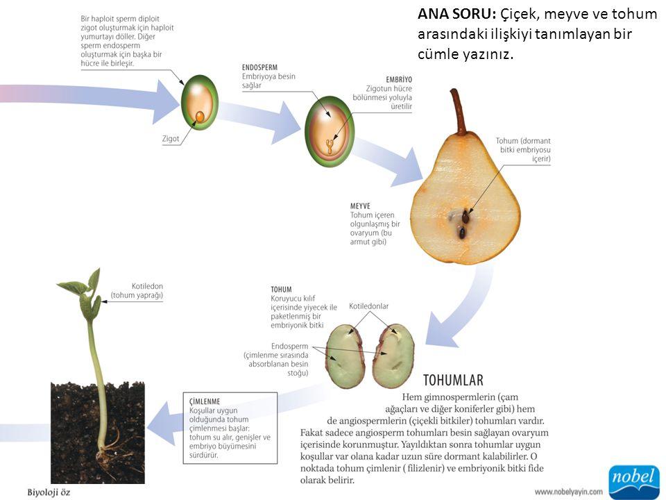 ANA SORU: Çiçek, meyve ve tohum arasındaki ilişkiyi tanımlayan bir cümle yazınız.