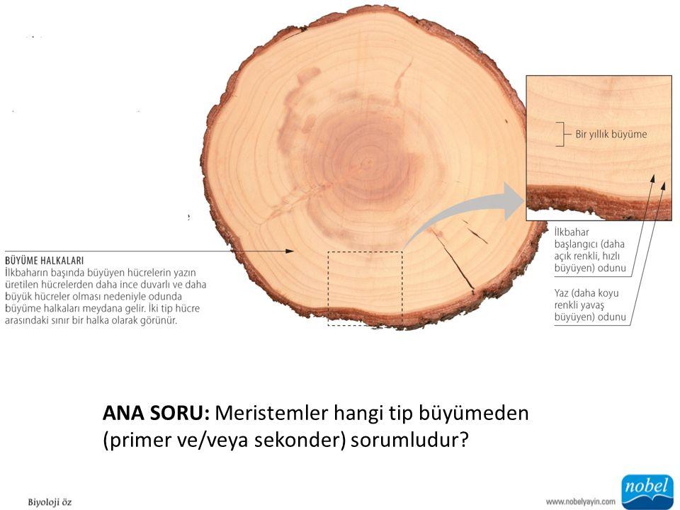 ANA SORU: Meristemler hangi tip büyümeden (primer ve/veya sekonder) sorumludur