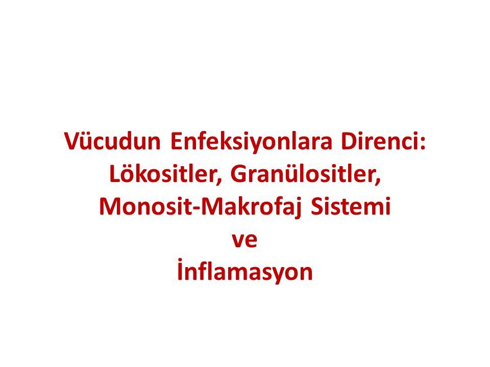 Vücudun Enfeksiyonlara Direnci: Lökositler, Granülositler, Monosit-Makrofaj Sistemi ve İnflamasyon
