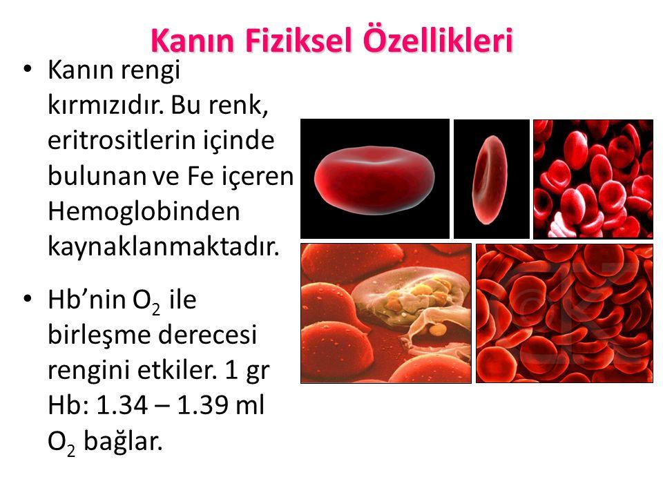Kanın Fiziksel Özellikleri Kanın rengi kırmızıdır. Bu renk, eritrositlerin içinde bulunan ve Fe içeren Hemoglobinden kaynaklanmaktadır. Hb'nin O 2 ile
