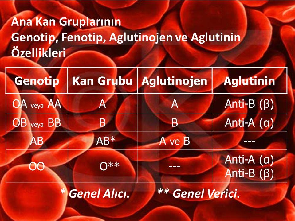 Ana Kan Gruplarının Genotip, Fenotip, Aglutinojen ve Aglutinin Özellikleri GenotipKan GrubuAglutinojenAglutinin OA veya AAAAAnti-B (β) OB veya BBBBAnt