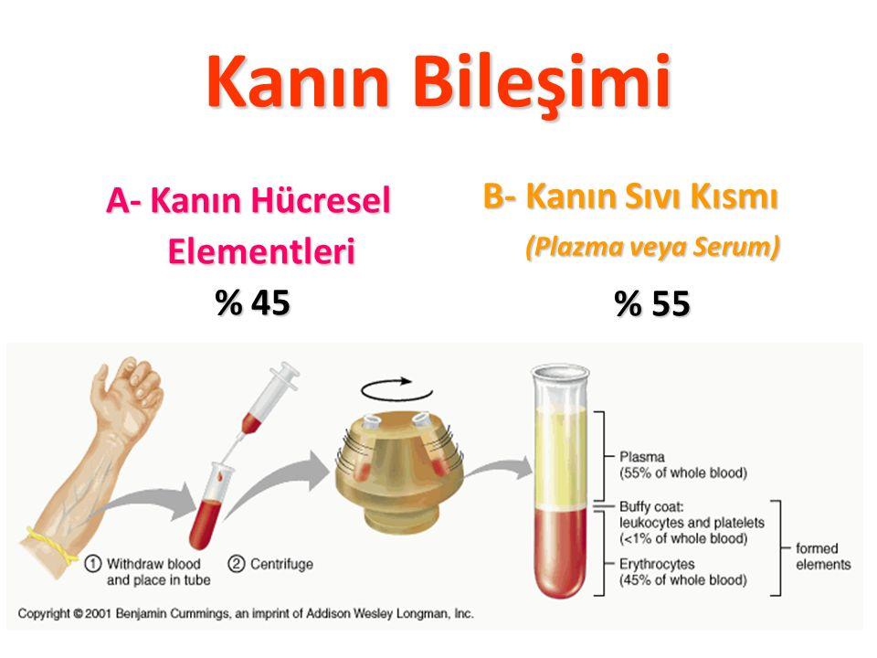 Kanın Bileşimi A- Kanın Hücresel Elementleri Elementleri % 45 B- Kanın Sıvı Kısmı (Plazma veya Serum) (Plazma veya Serum) % 55