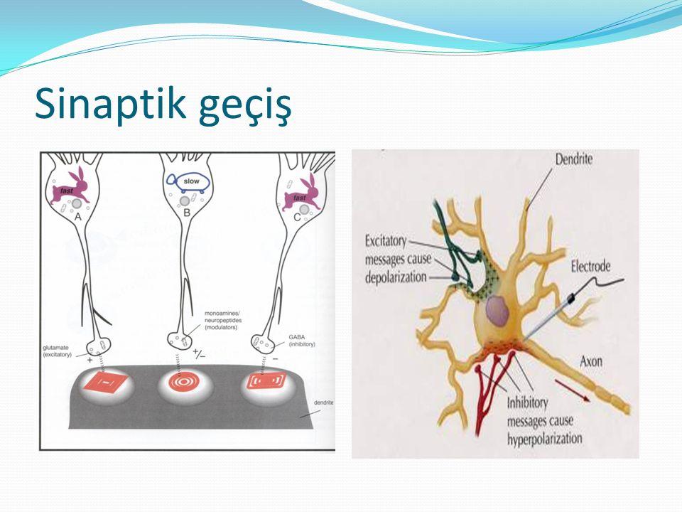 Aksodendritik Sinaps Aksosomatik Sinaps Aksoaksonik Sinaps
