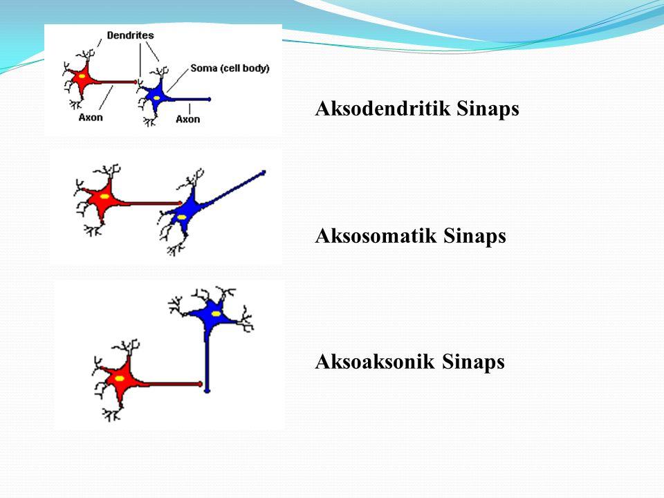 Asetilkolin (Ach): Alzheimer'da çok yararlı olan bazı ilaçlar beyinde asetilkolin miktarını arttıran ilaçlardır.